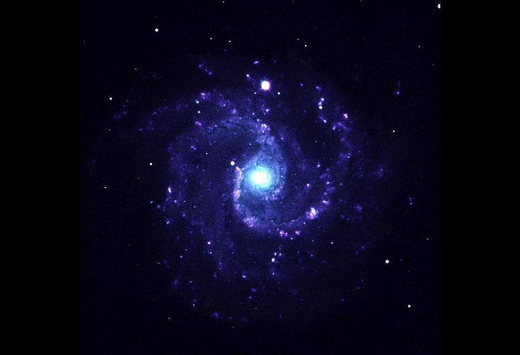 NGC 3184 Spiral Galaxy