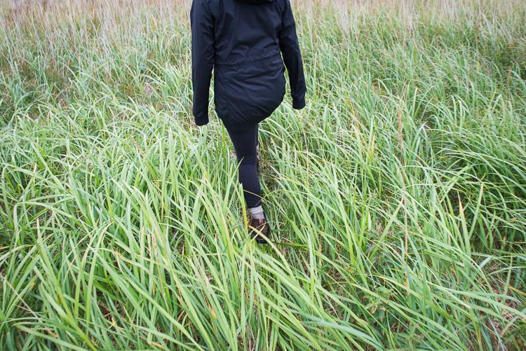 Walking through long coastal grass