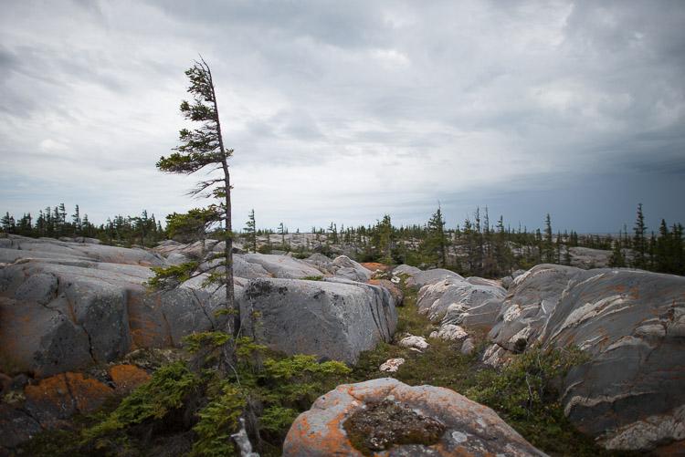 Windblown trees dot the Hudson Bay coast