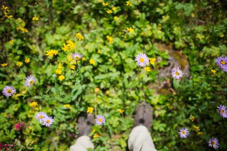 Alpine meadow wildflowers underfoot