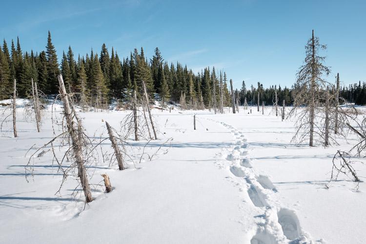 Fresh footprints on fresh snow