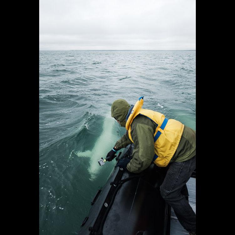 Dom Tollit studying belugas in Churchill, Manitoba