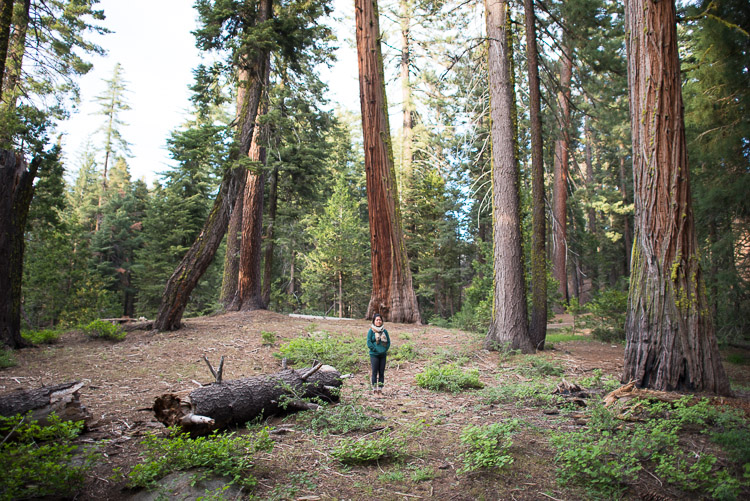 Amidst a grove of giant sequoias