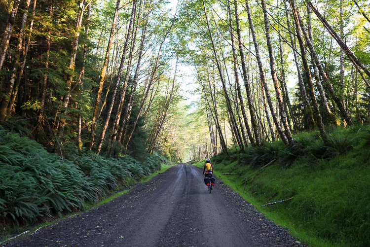 Bicycle tourist descending logging road to Rennell Sound - west Haida Gwaii