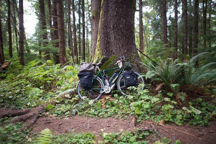 Touring bicycle fully loaded up against an old growth tree on the Haida Gwaii