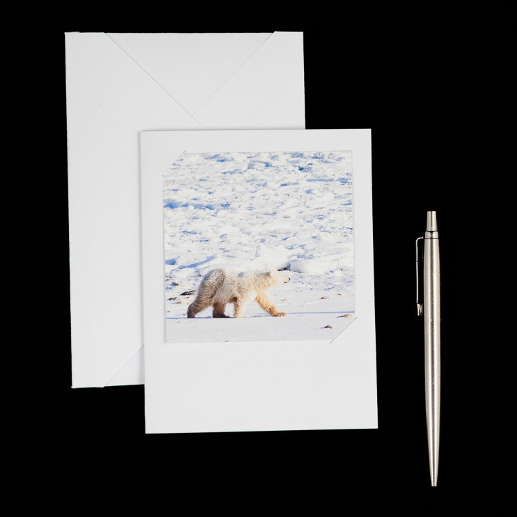 Polar bear cub - greeting card