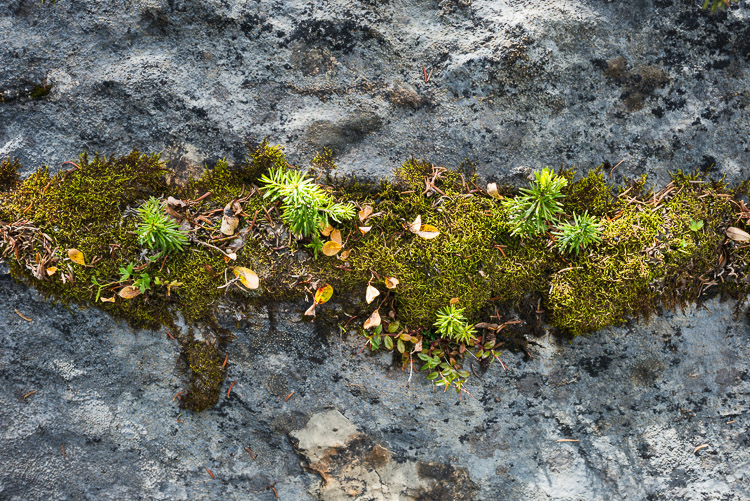 Life on a rock - moss, trees, and more