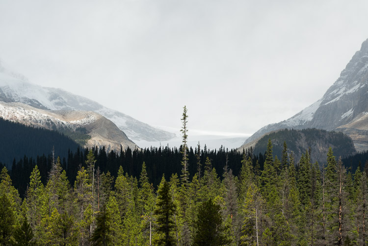 Tree silhouetted against Yoho Glacier