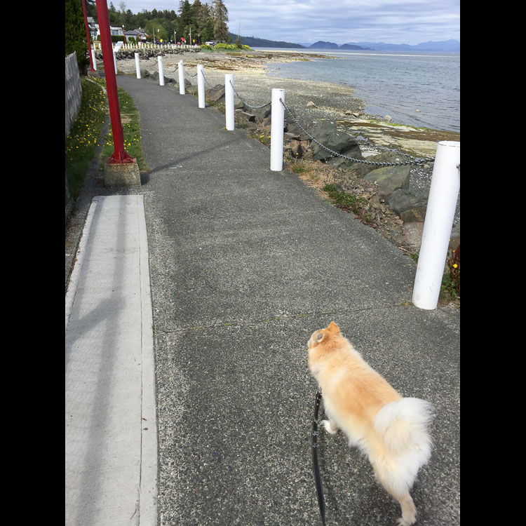 Walking dog in Port Hardy
