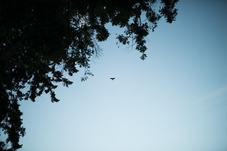Soaring silhouette of a bird against a clear sky at dusk