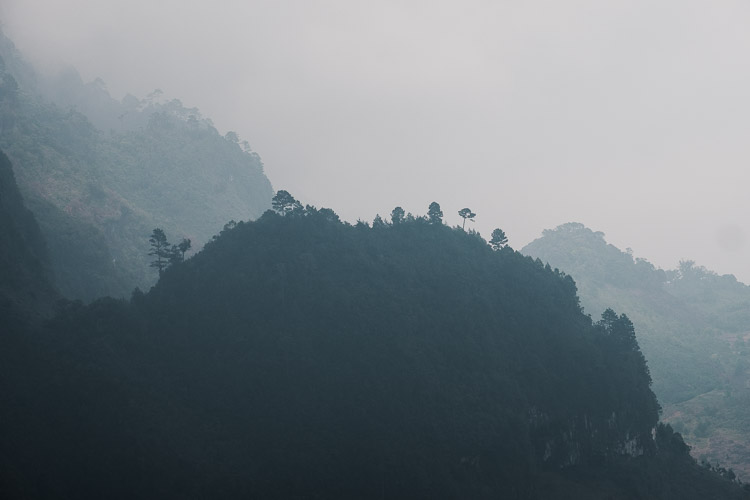 Trees cover the mountain peaks in the cloud forests of Guatamala's highlands