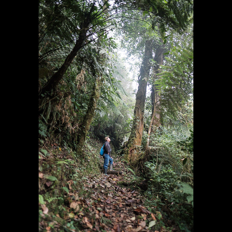 Walking through the cloud forest with a Mayan guide